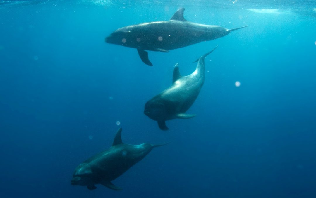 Lessons from The Dolphins: The Wonder of Going Deep