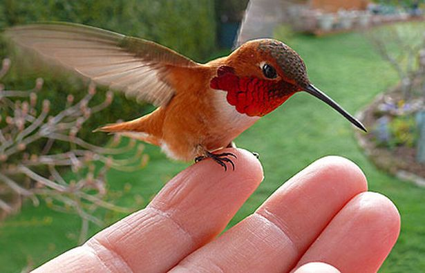 Waking Up With Hummingbird