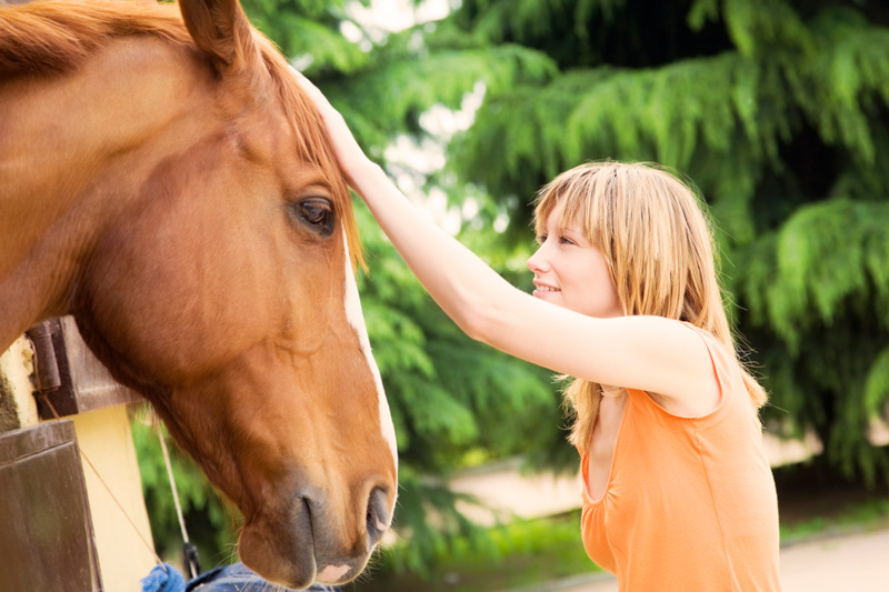 Mindfulness With Horses Workshop